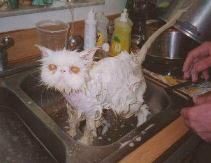 Eval Cat!!1