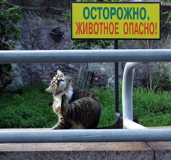 Опасное животное