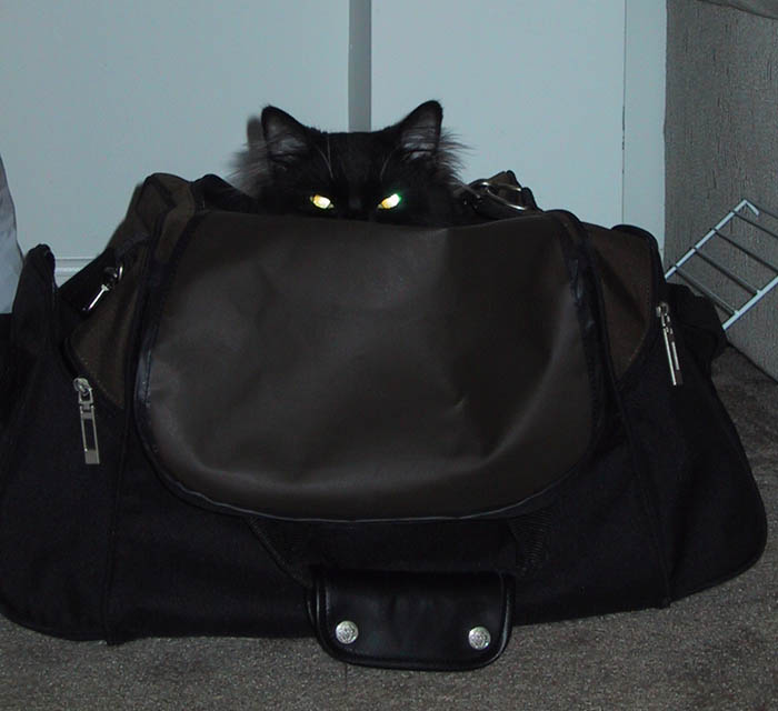 Жуткий кот директора музея