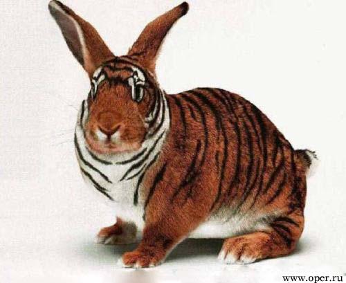 Свирепый заяц