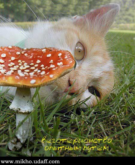 Хапнул грибков