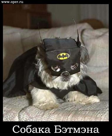 Собака Бэтмэна