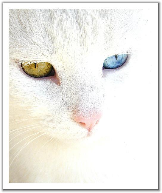 Глазастый