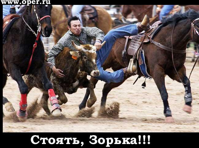 Стоять, Зорька!
