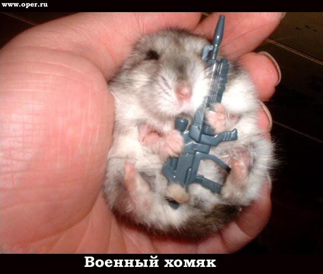 ...на портале Hamster Pets - hamster-pets.ru.