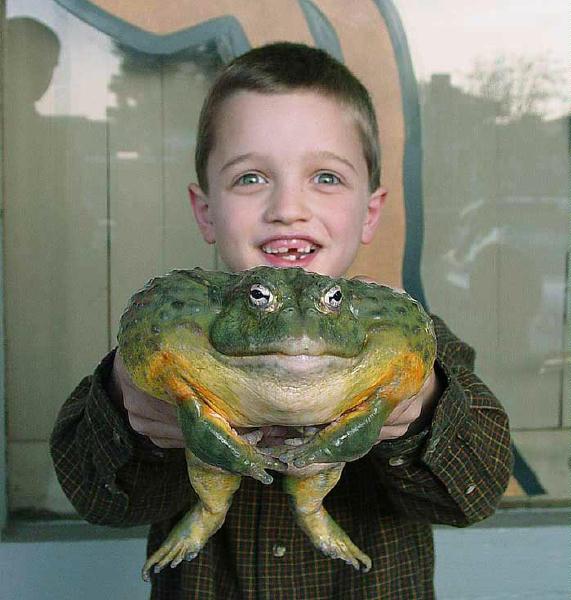 Вот она какая - жаба!