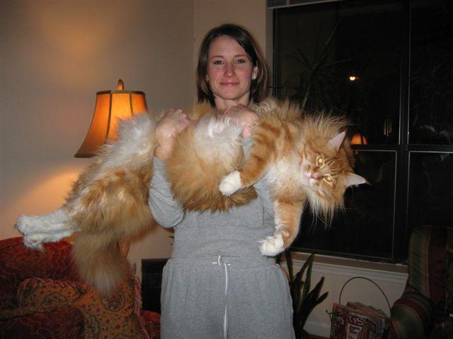 Фото мега котов
