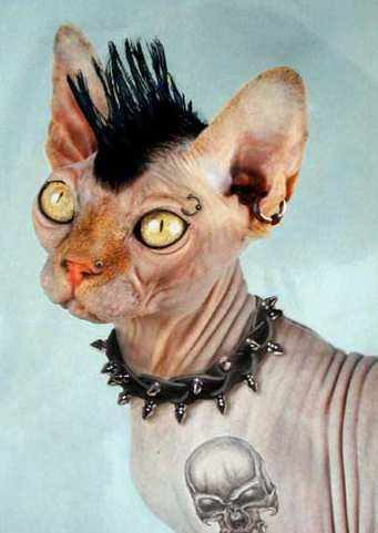 Готичный кот
