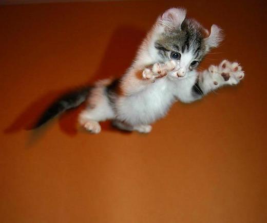 Они ка-ак прыгнут!!!