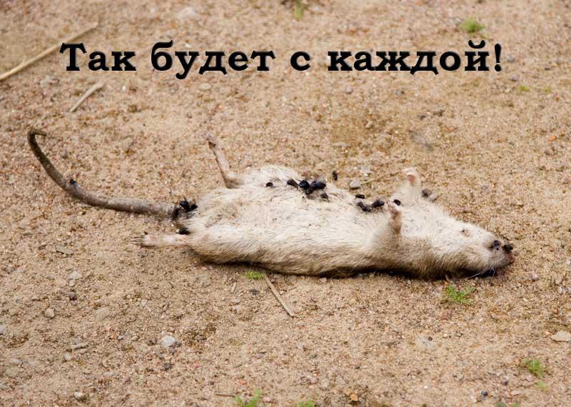 [16:28:50] <Missenka> таг