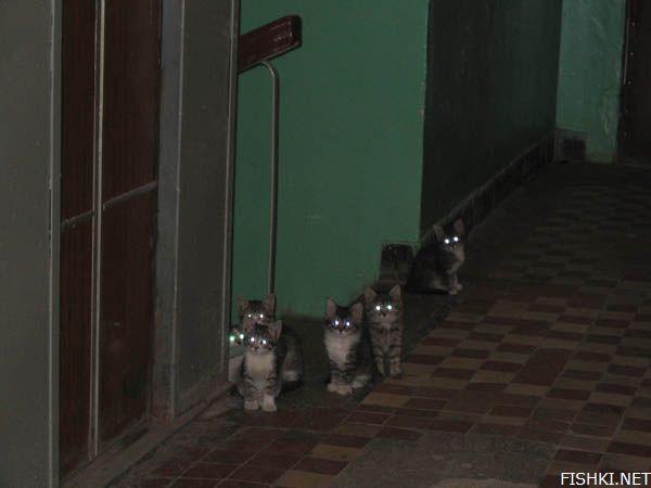Они ждут