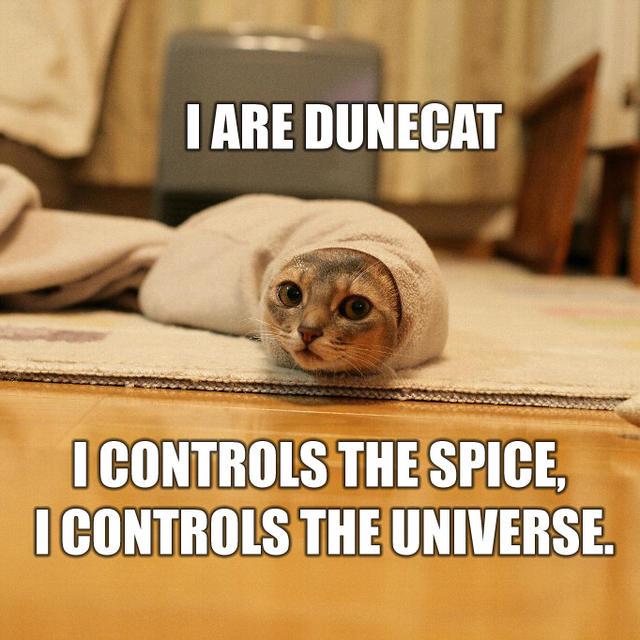Коты Дюны