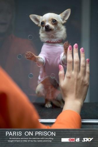 Собачка Пэриса