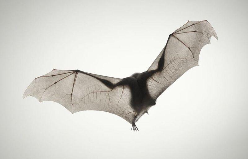 Ужас, летящий на крыльях