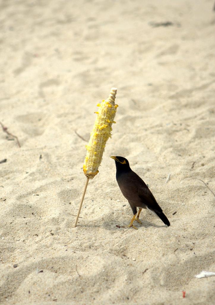 Наглая таиландская птица