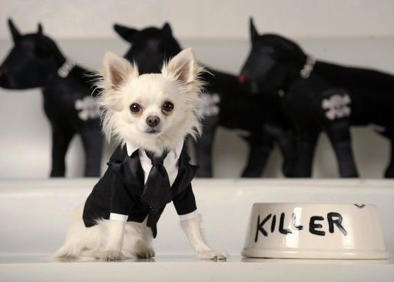 Собака-убийца