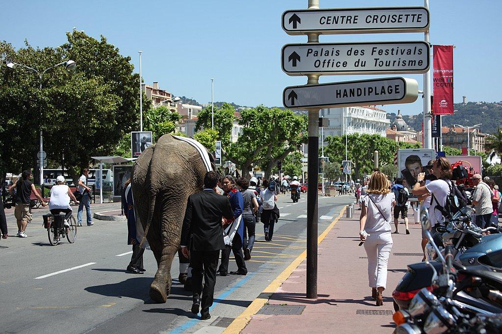 Слон в Каннах