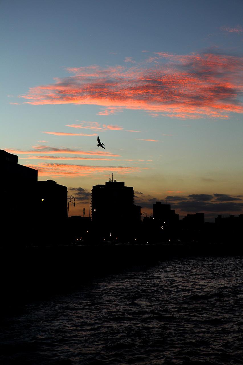 Вечерний пеликан
