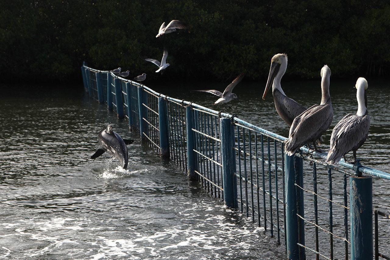 Дельфин пугает птиц