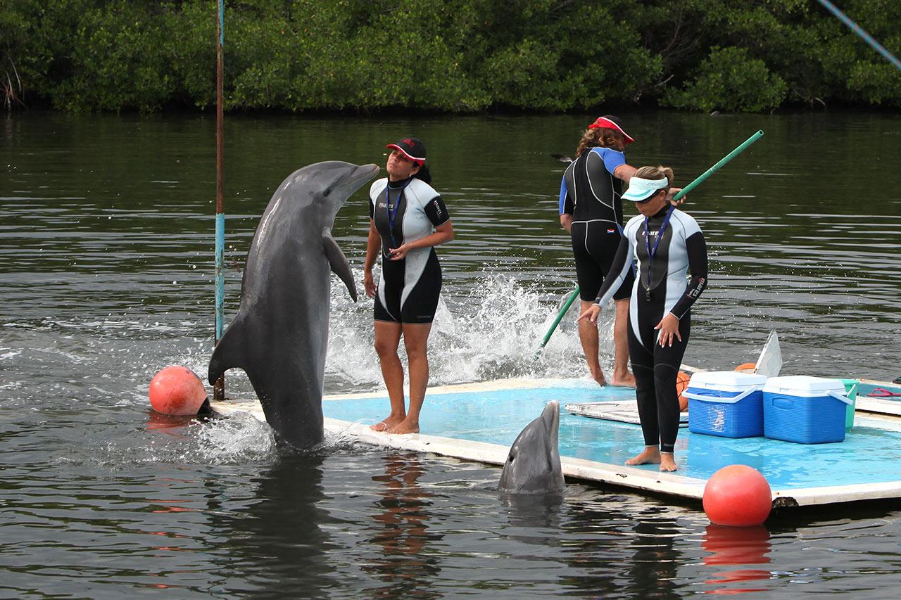 Дельфины приступили к работе