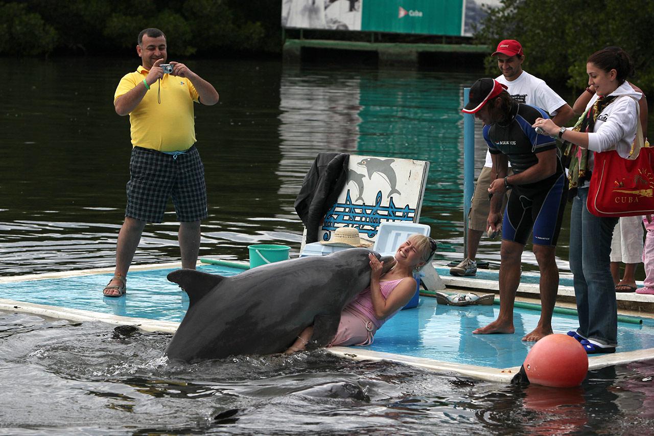 Член у дельфина видео