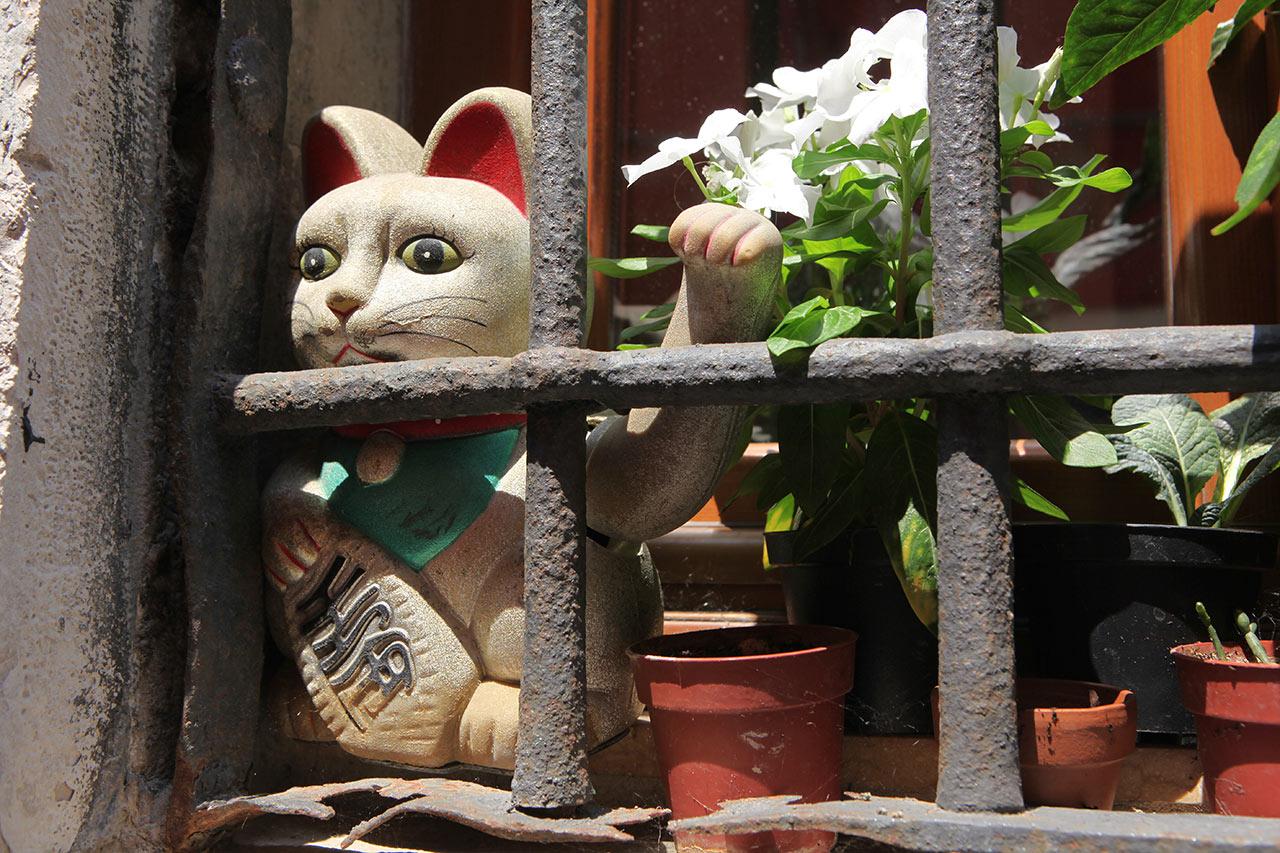 Венецианский кот