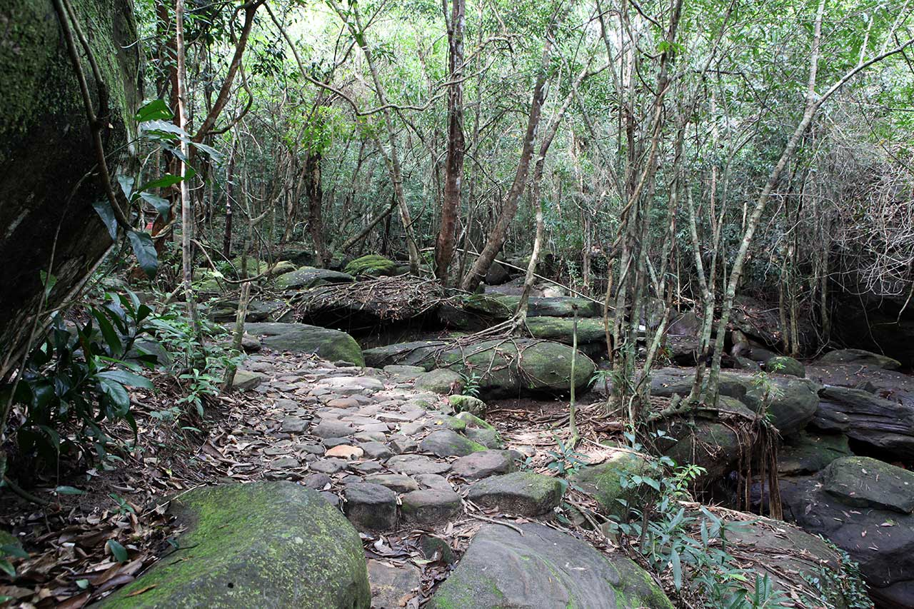Дорога через джунгли