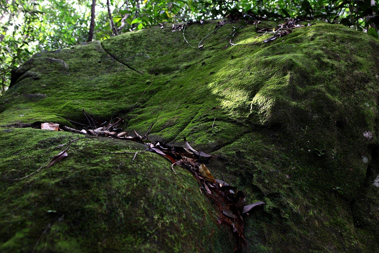 Лесной валун
