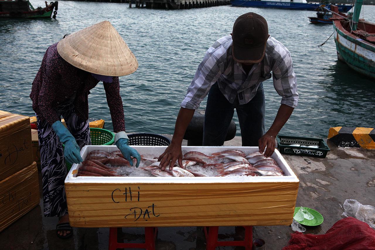 Упаковка рыб