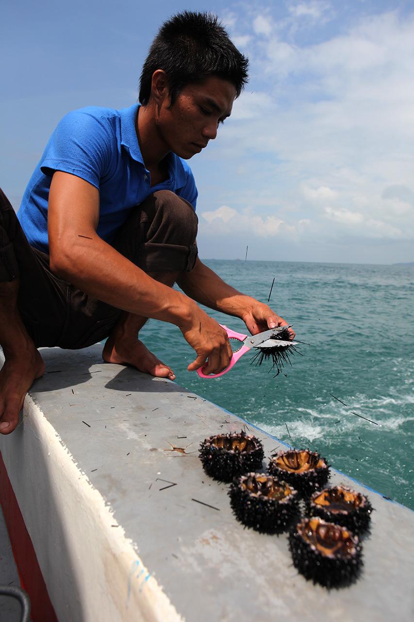 Морские ежи готовы к варке