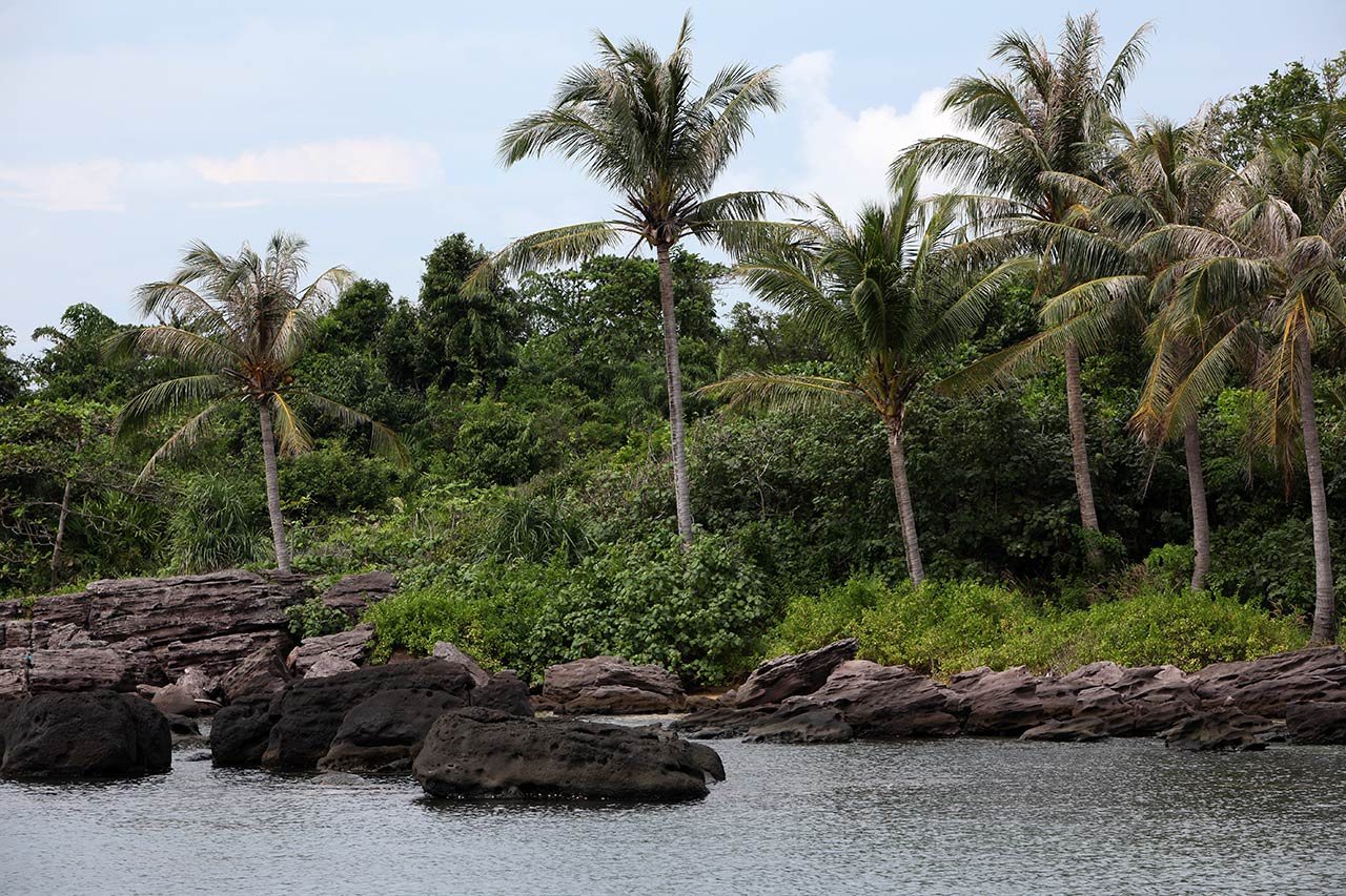 Остров с пальмами