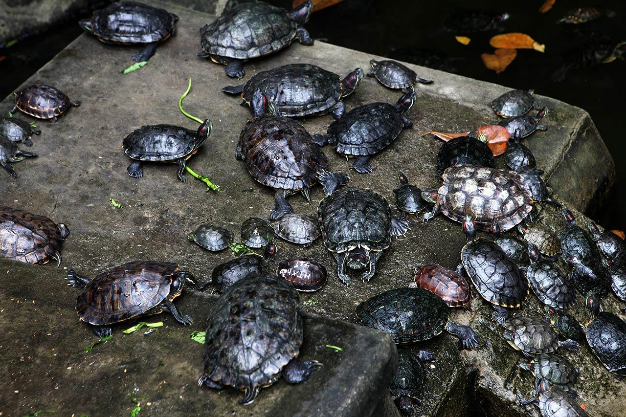 Именные черепахи