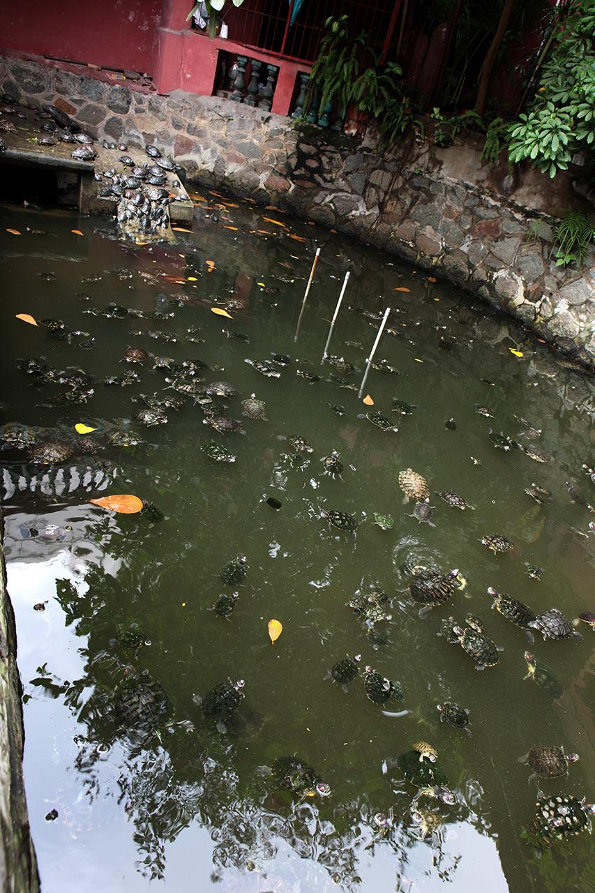 Черепаховый пруд