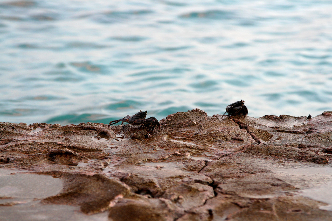 Мальдивские крабы