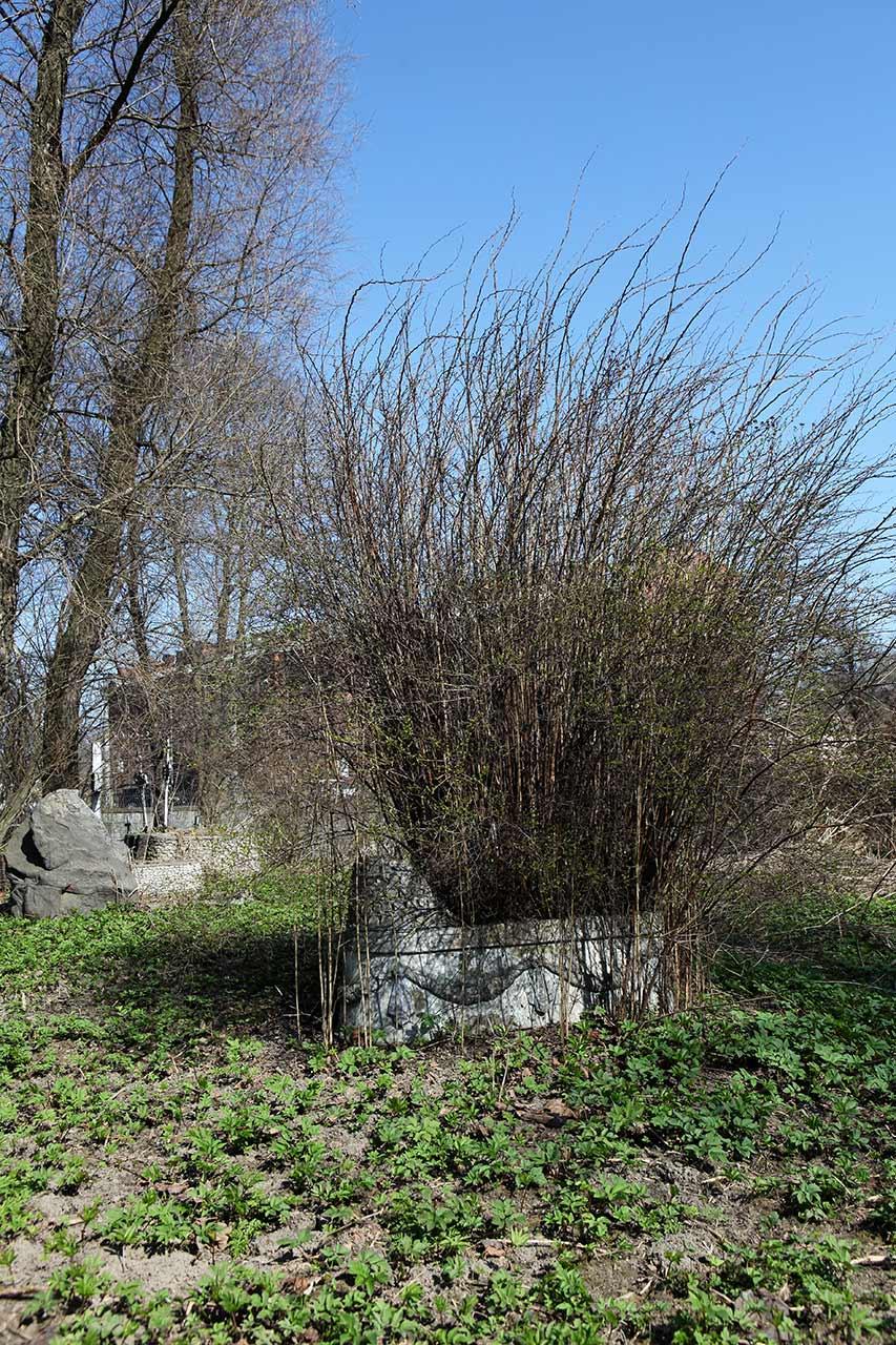 Ухоженная могилка
