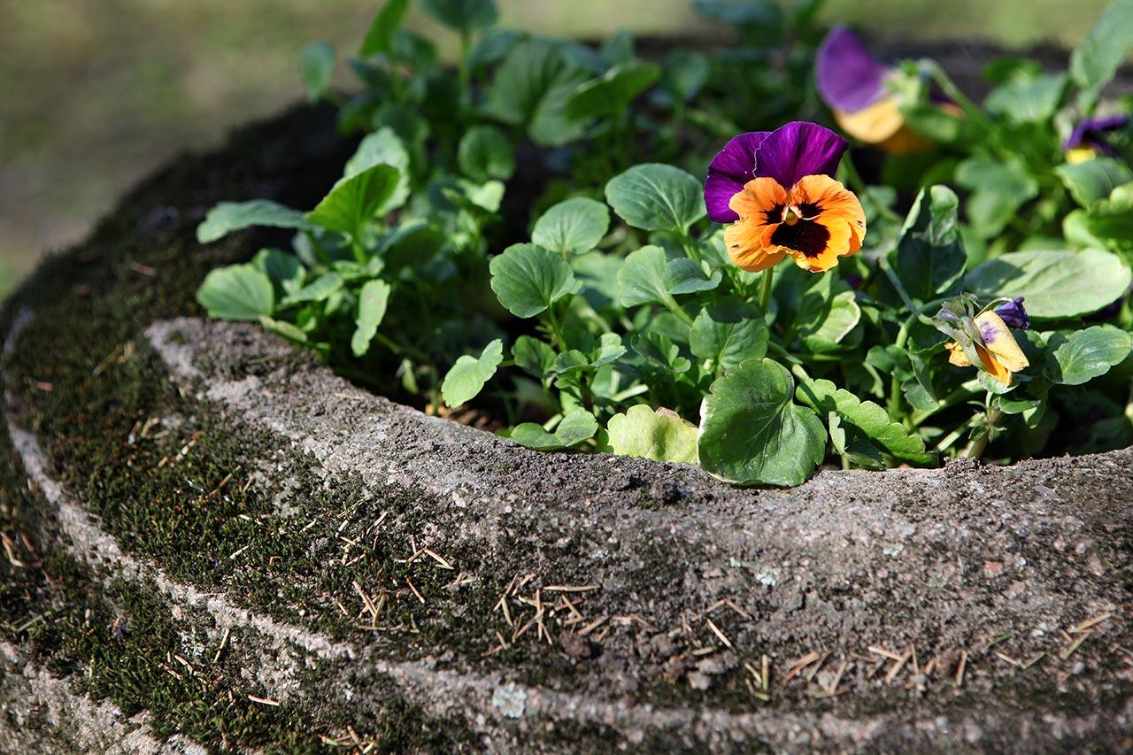 Кладбищенские цветочки
