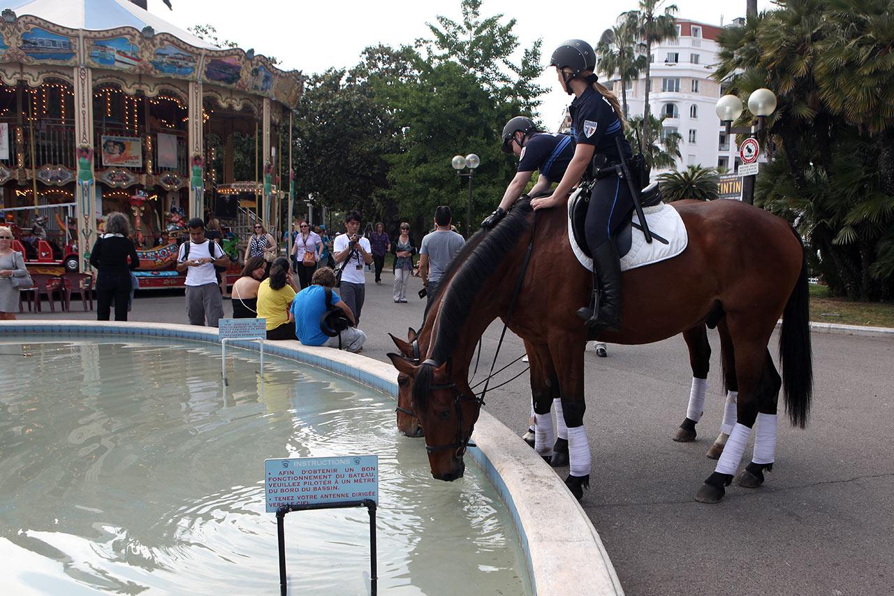 Поение каннских коней