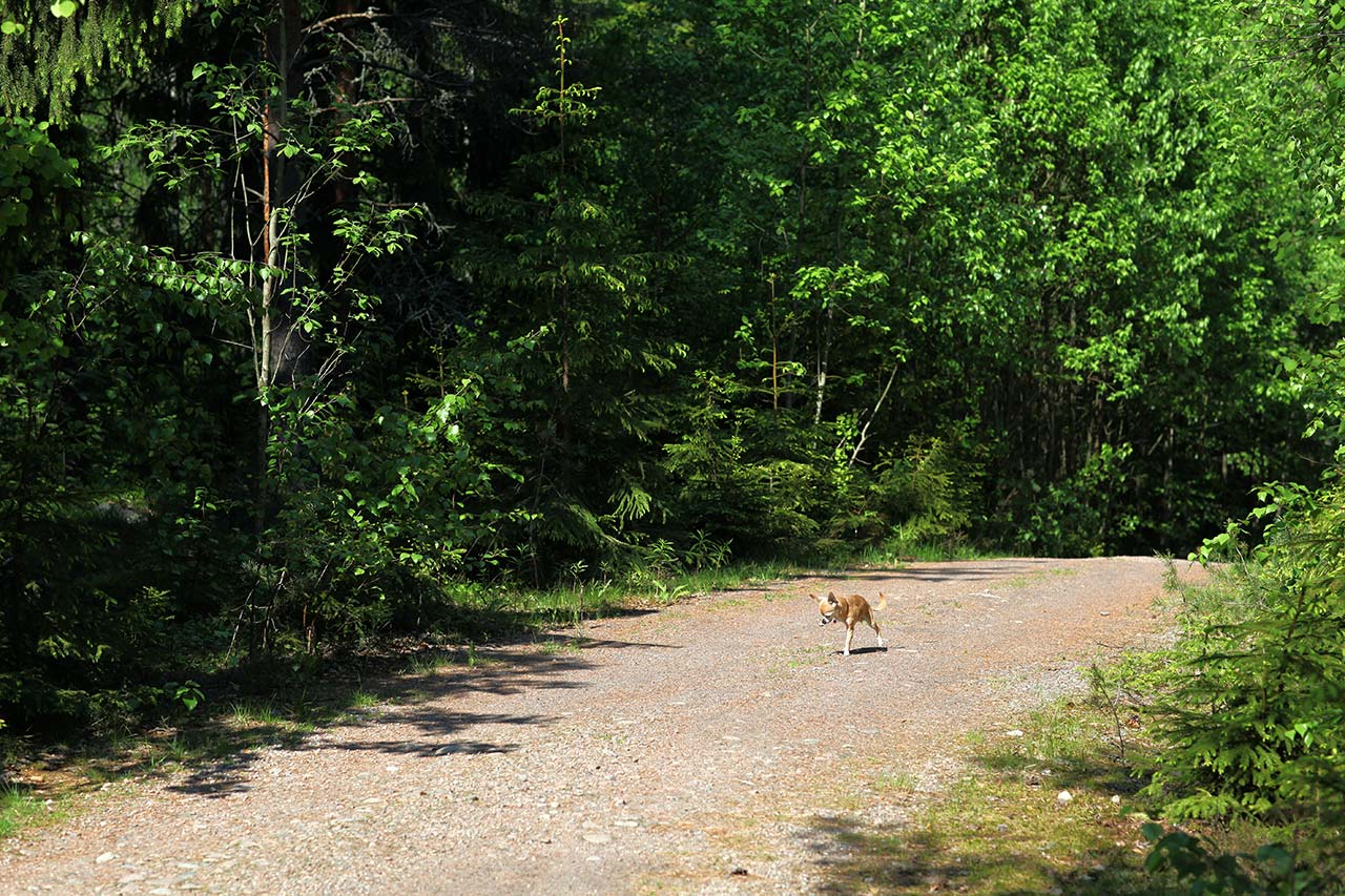 Собака-убийца и финские муравьи