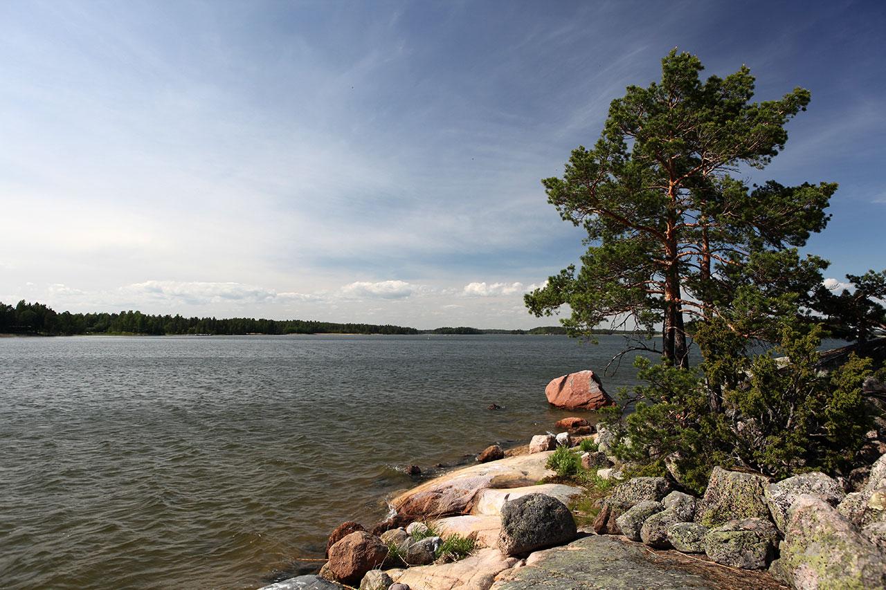 На финских камнях растут деревья