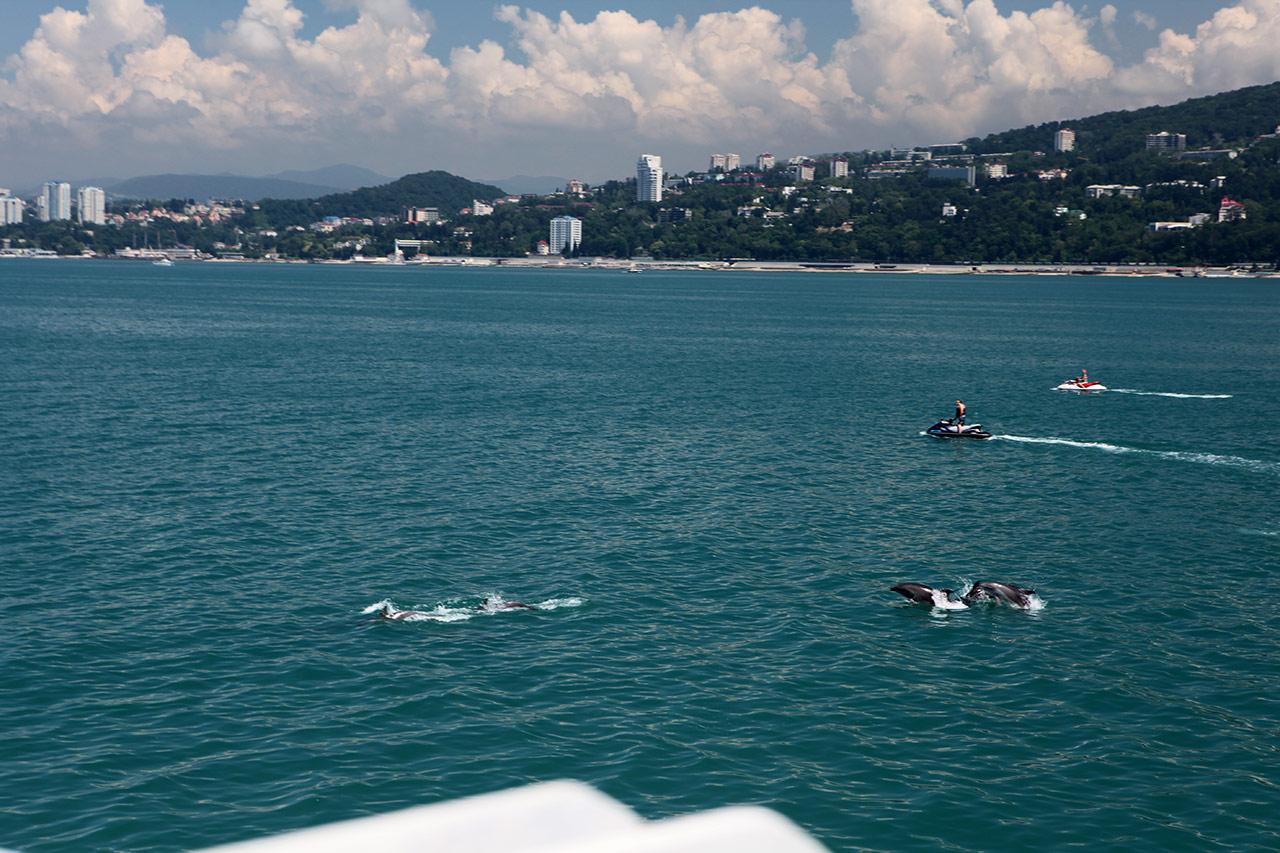 Черноморские дельфины