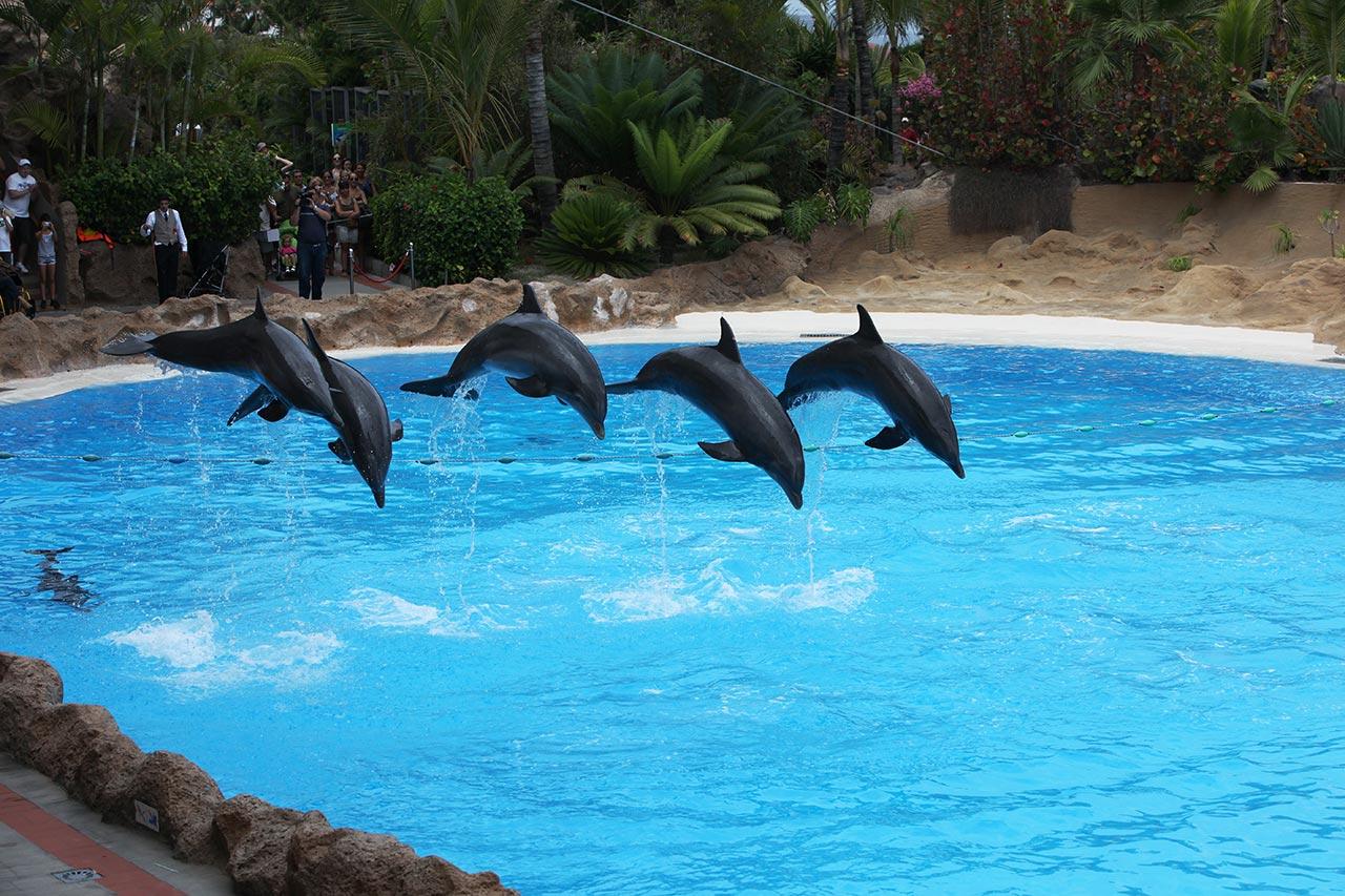 Канарские дельфины