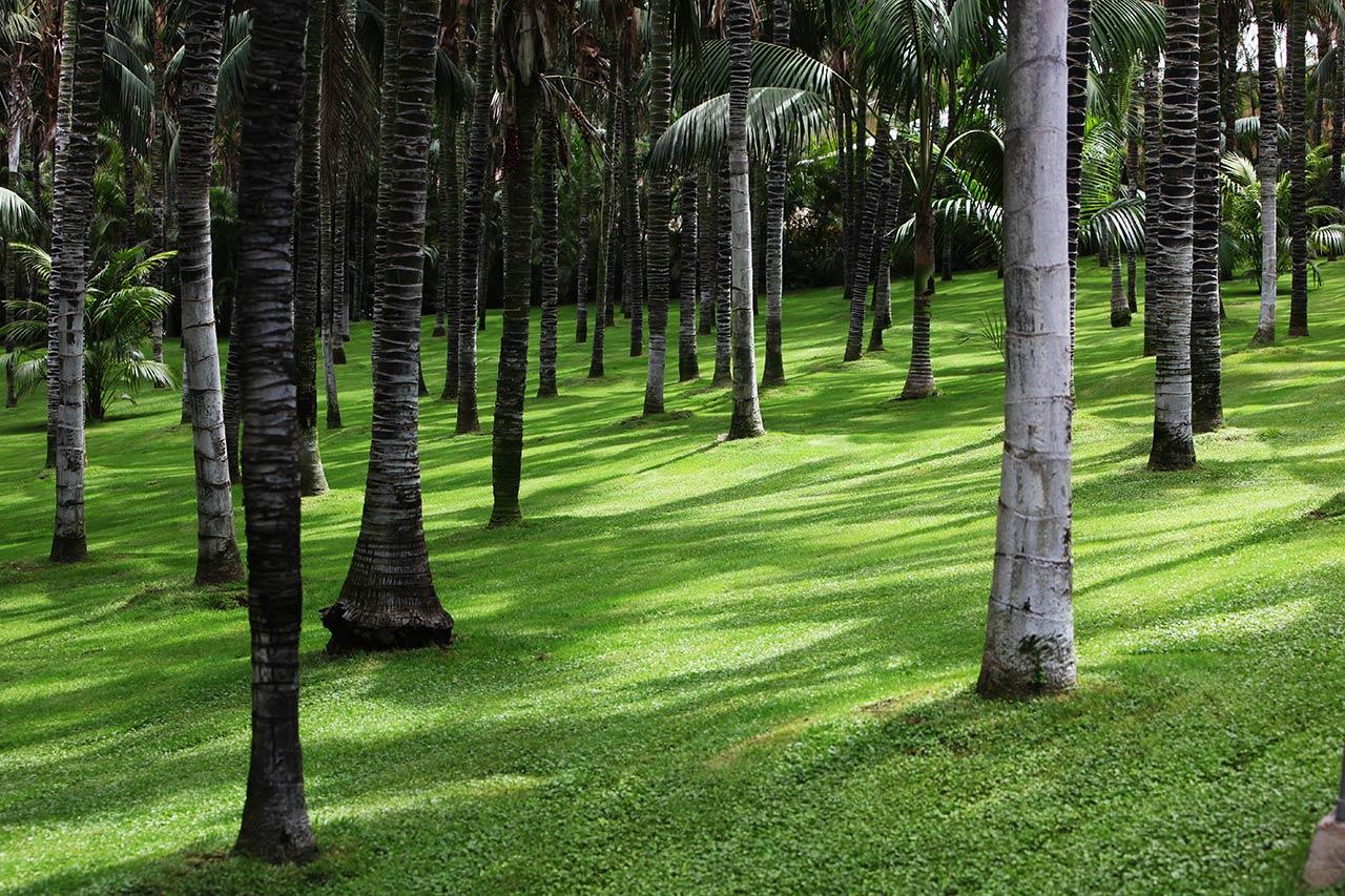 Канарский лес