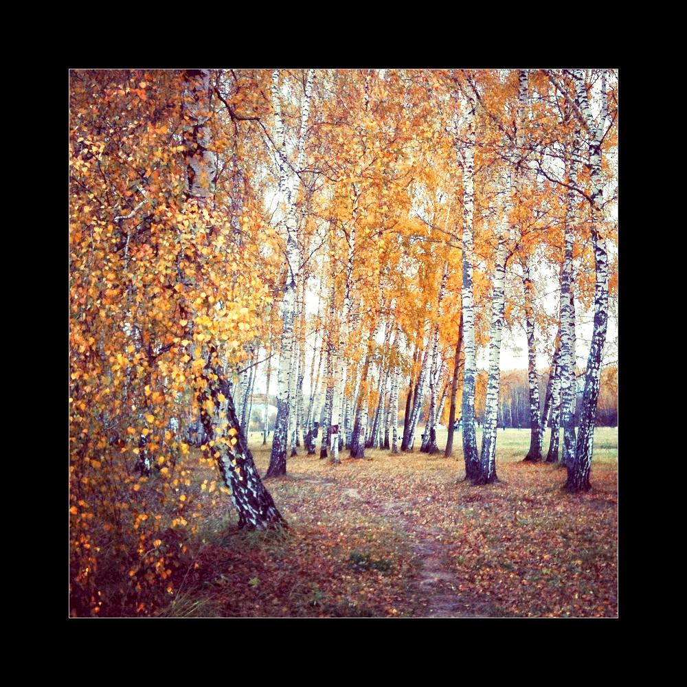 Про осень в Бородино  © onepamop&ойфон