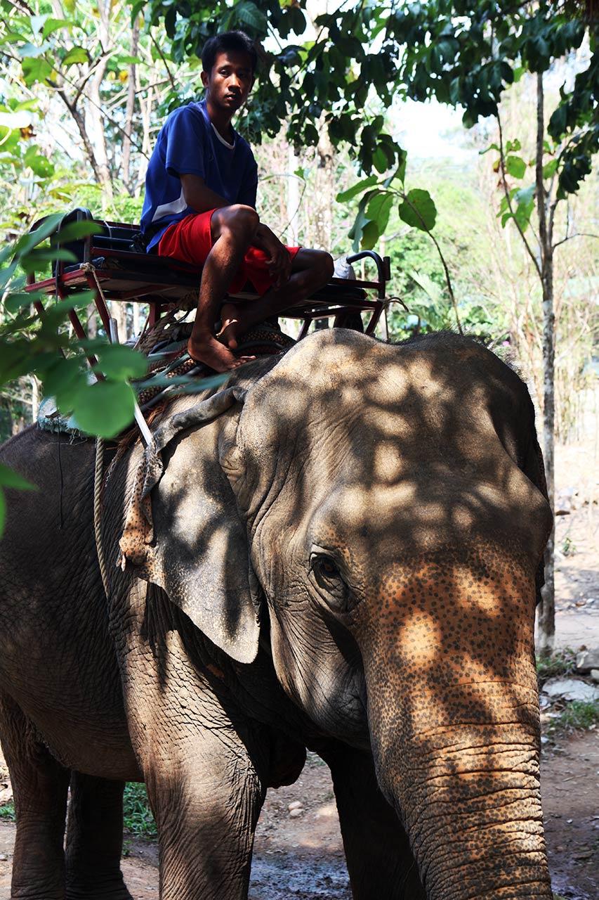 Слон и слоновод