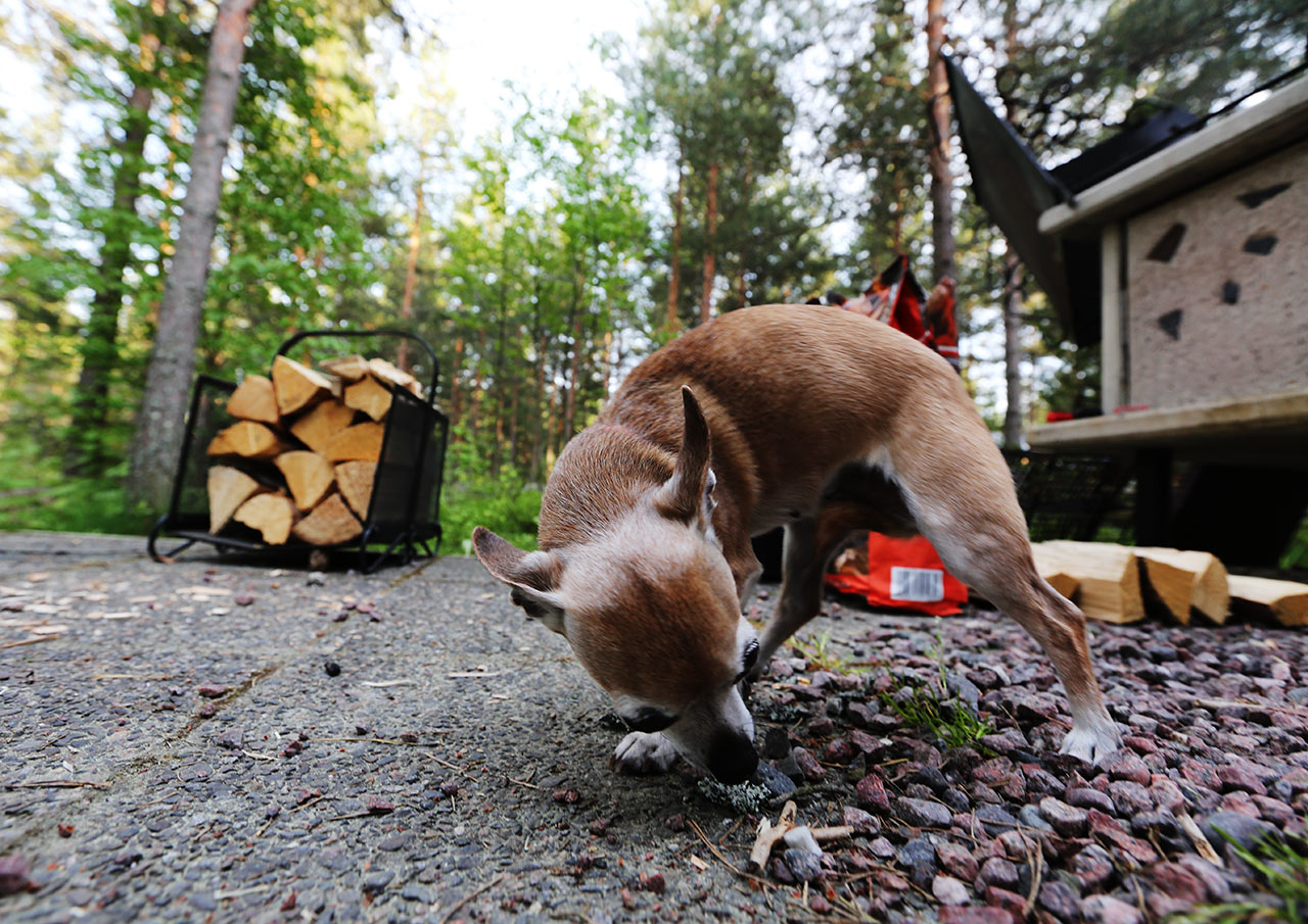 Собака-убийца на разведвыходе