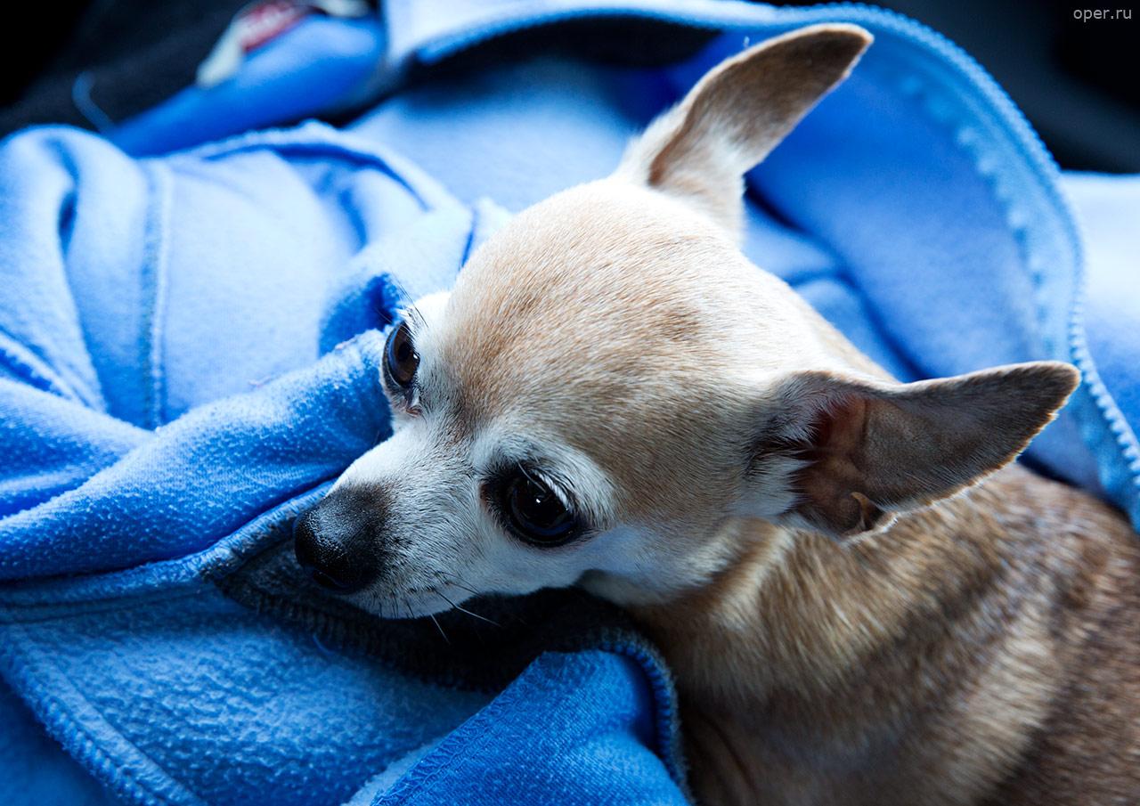Собака-убийца в автомобильной пробке