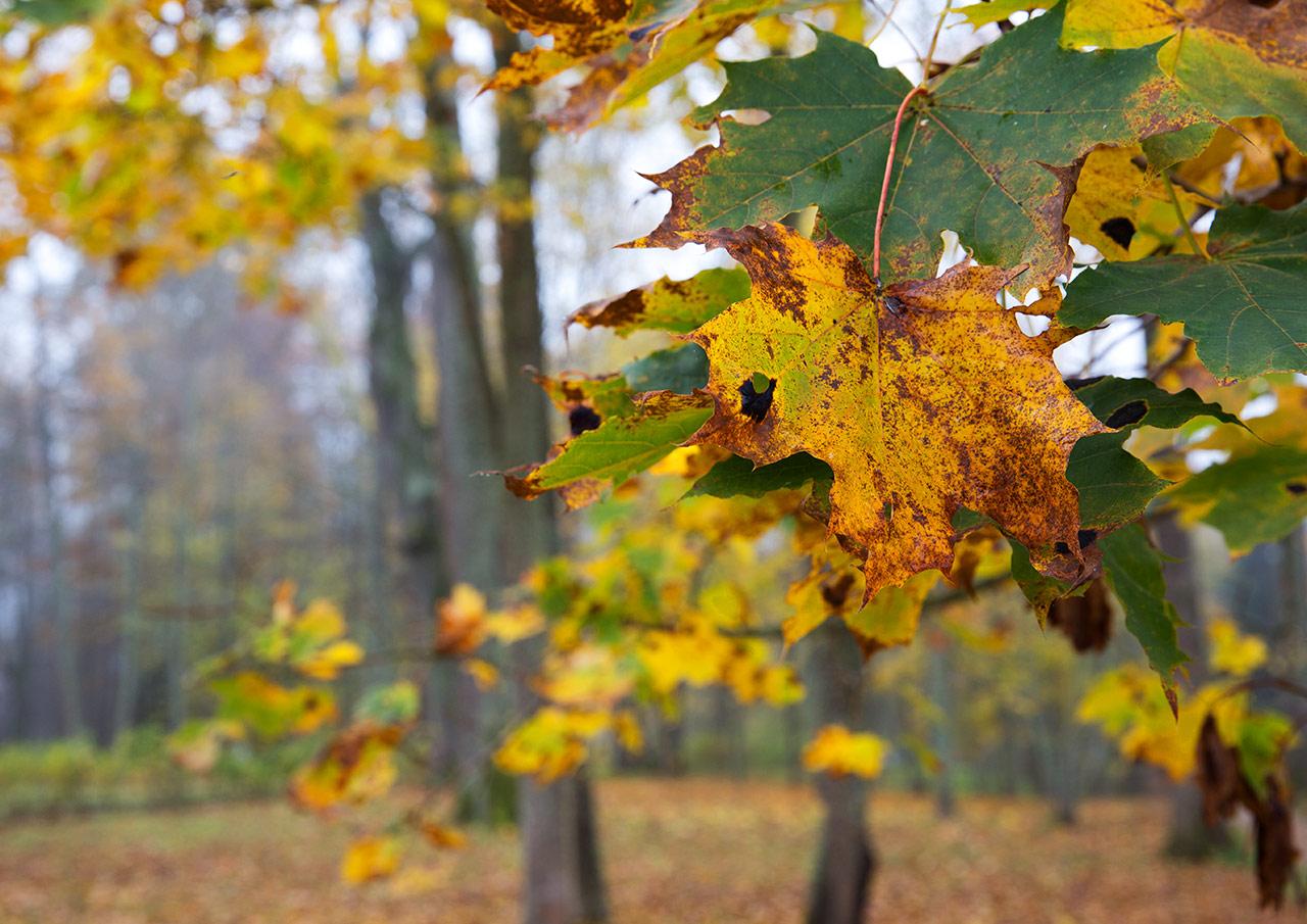 Погрызенные листья