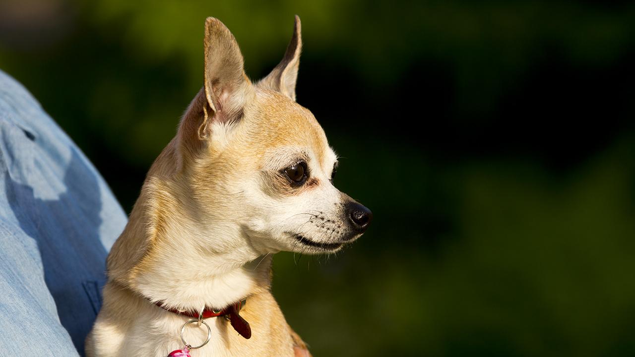 Собака-убийца смотрит на Ладогу