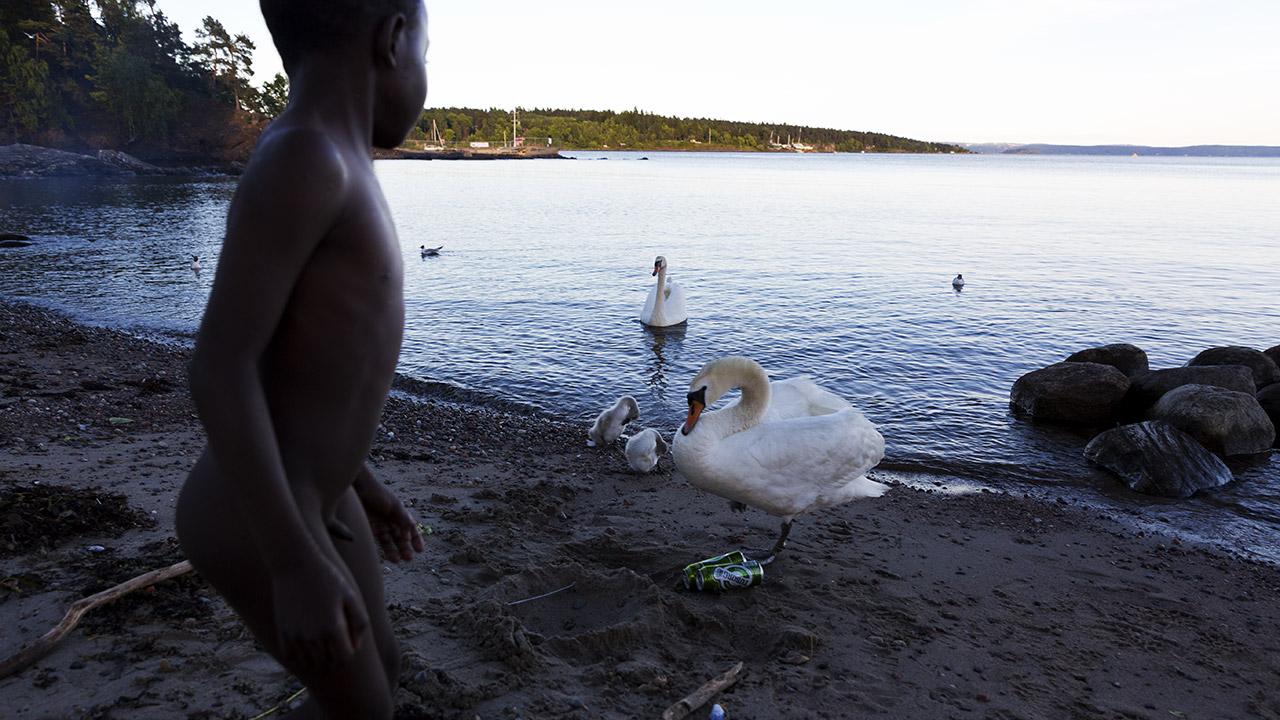 Норвежец и лебеди