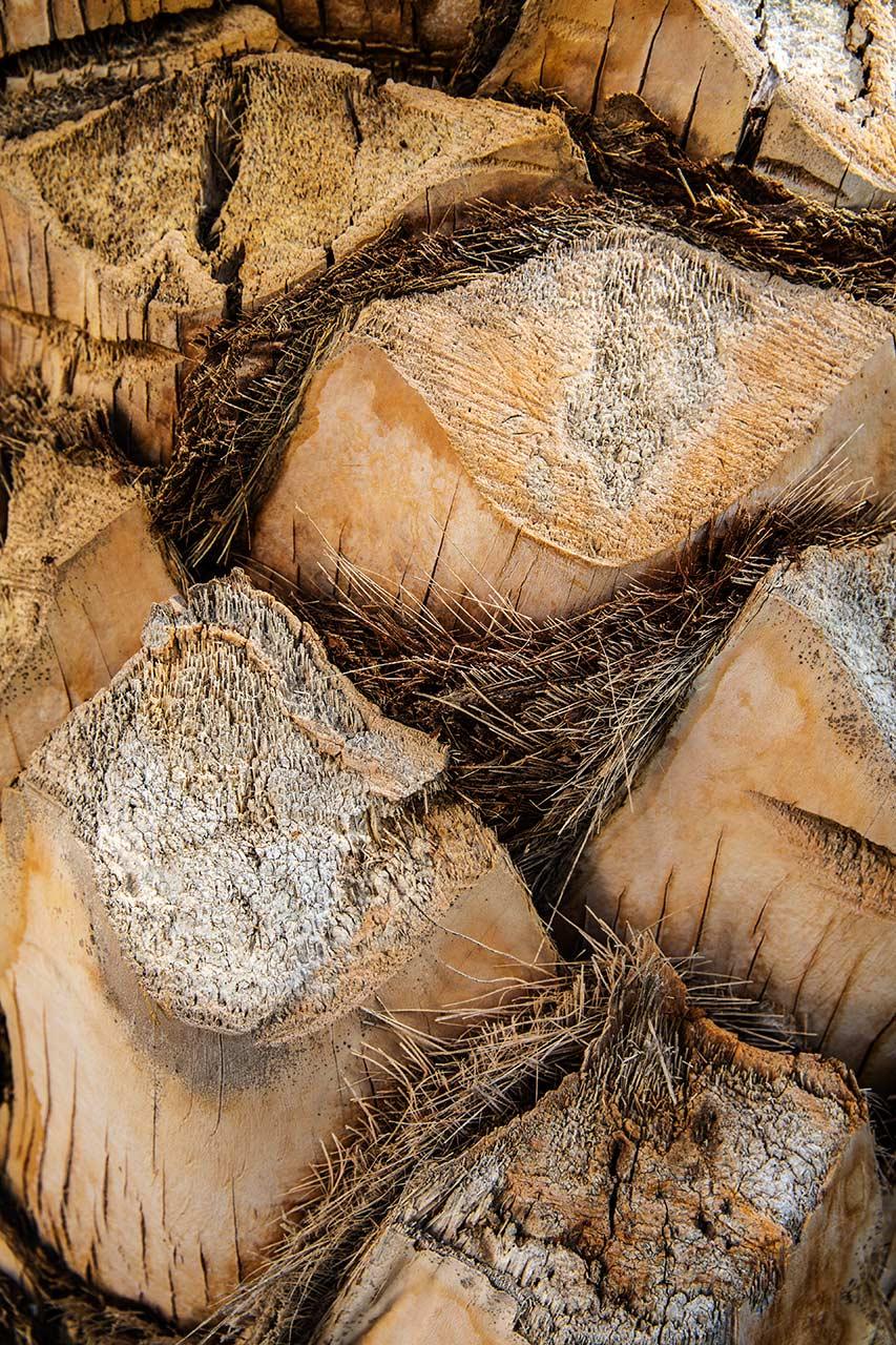 Шкура пальмы